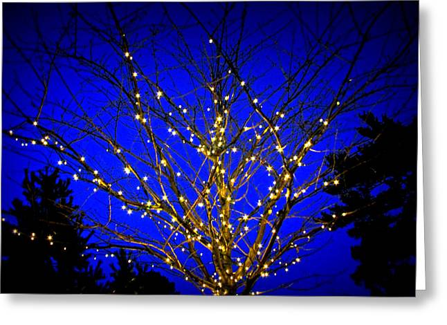 Greeting Card featuring the photograph New York Botanical Garden Holiday Tree by Aurelio Zucco