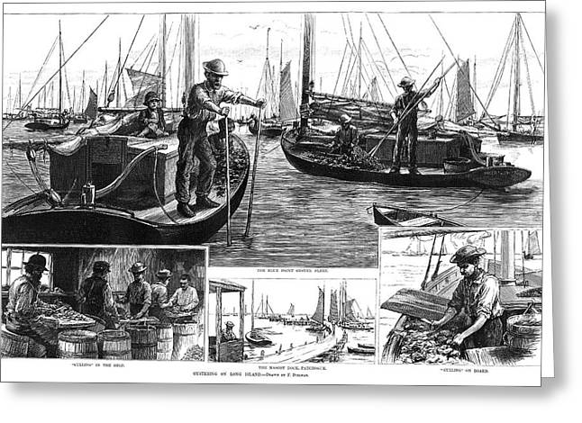 New York Oysters, 1886 Greeting Card