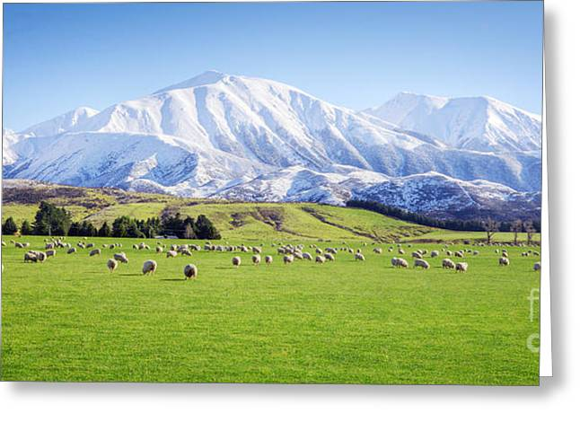 New Zealand Farmland Panorama Greeting Card