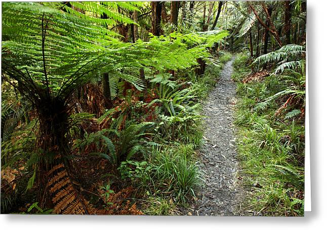 New Zealand Forest Greeting Card by Les Cunliffe