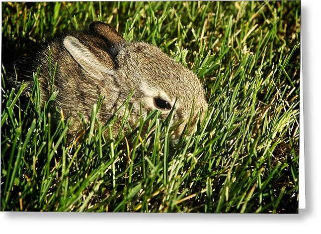 The Baby Cottontail Greeting Card