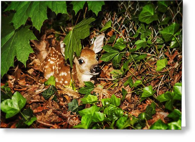 Greeting Card featuring the photograph Newborn Fawn  by Eleanor Abramson