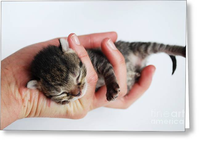 Newborn Kitten Greeting Card by Sarka Olehlova