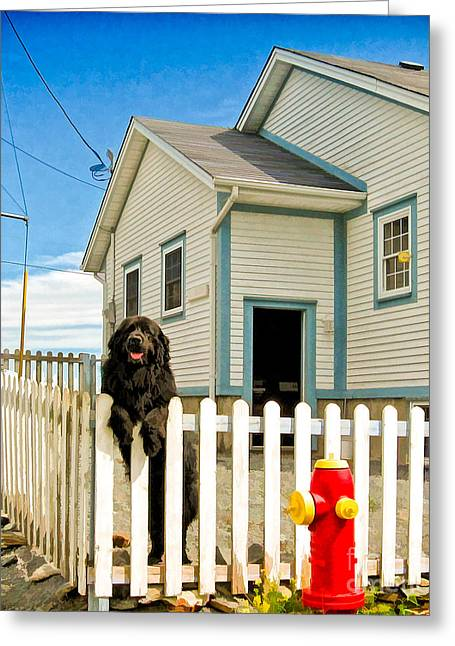 Newfoundland Dog In Newfoundland Greeting Card