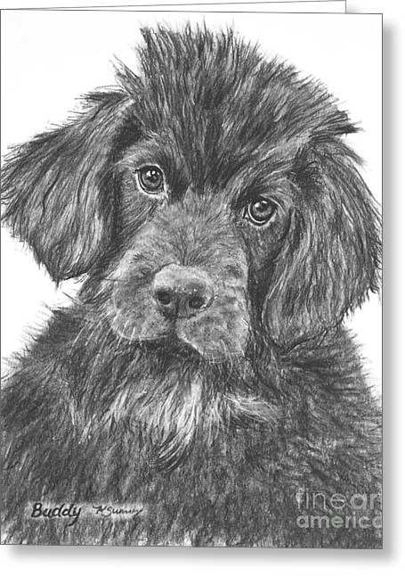 Newfoundland Puppy Sketch Greeting Card