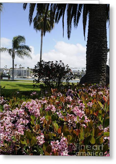 Newport Beach California Greeting Card by Timothy OLeary