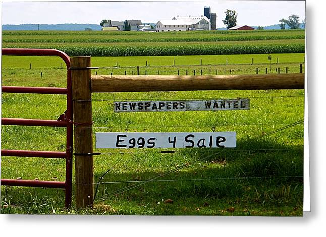 Newspapers Wanted Eggs 4 Sale Greeting Card