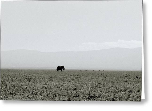 Ngorongoro Crater Greeting Card by Shaun Higson