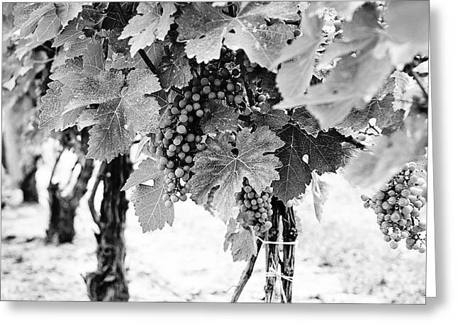 Niagara Grapes Greeting Card by Scott Pellegrin