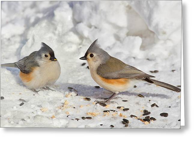 Nice Pair Of Titmice Greeting Card