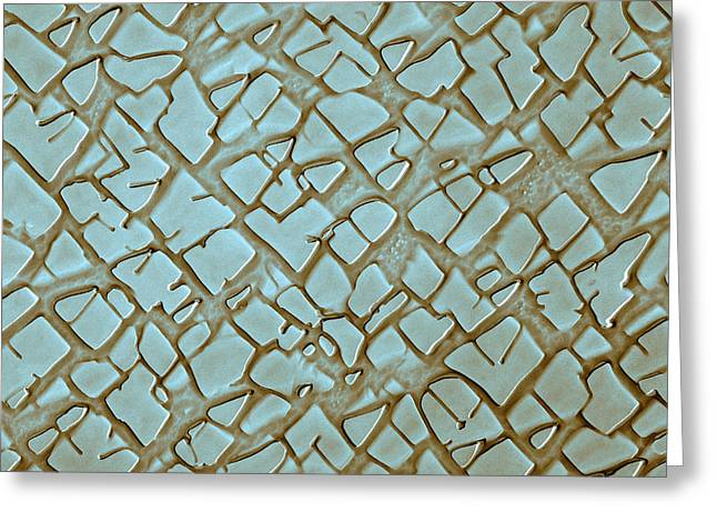 Nickel Alloy, Sem Greeting Card by Omikron