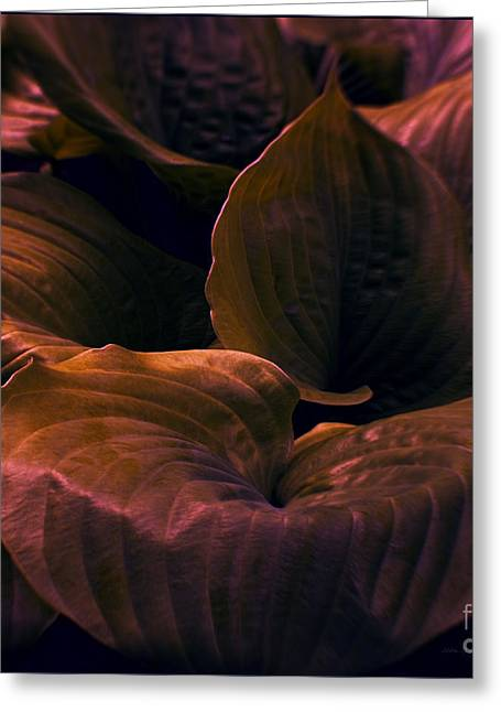 Night Abyss Greeting Card by Jean OKeeffe Macro Abundance Art