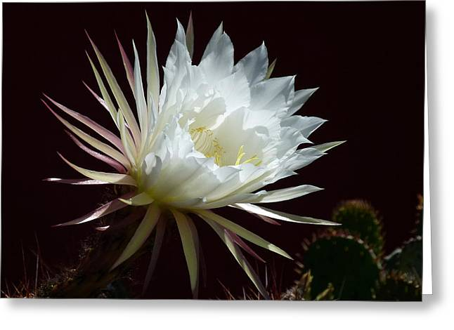 Greeting Card featuring the photograph Night Beauty by Cindy McDaniel