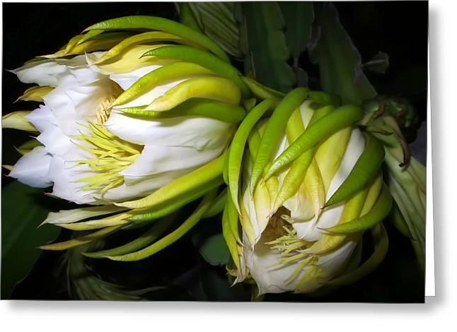 Night Blooming Cereus 31 Greeting Card by Dawn Eshelman