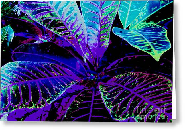 Night Falls On The Croton Greeting Card by Ann Johndro-Collins