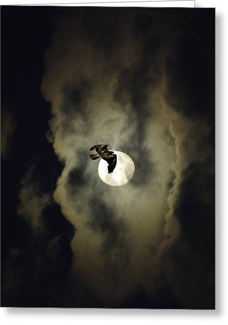 Night Hawk Greeting Card