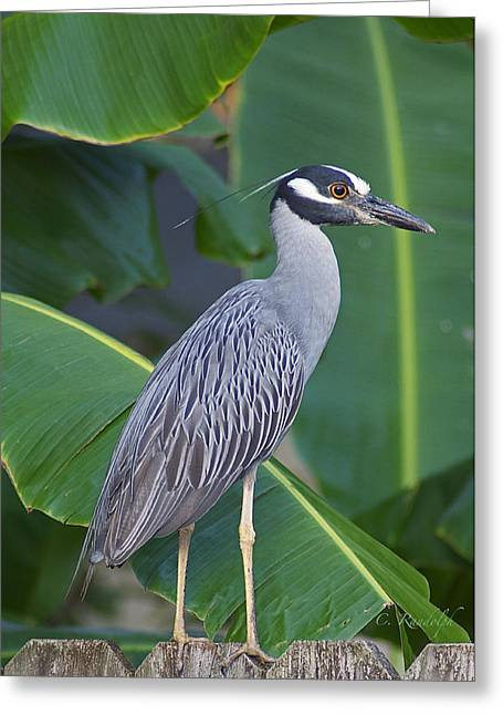 Night Heron Greeting Card by Cheri Randolph