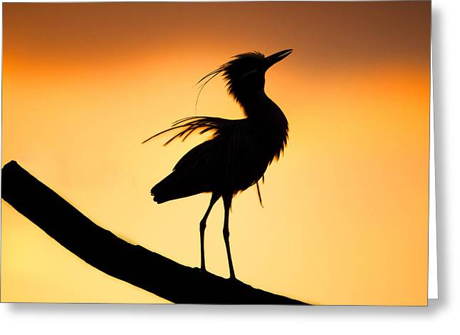 Night Heron Silhouette 2 Greeting Card by Andres Leon