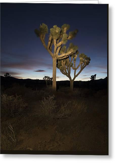 Night Light Painting Joshua Tree National Park Greeting Card