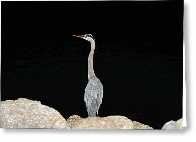 Night Of The Blue Heron 2 Greeting Card