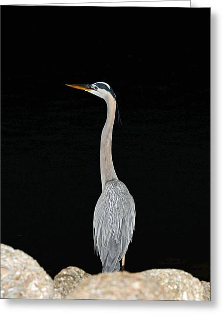 Night Of The Blue Heron 3 Greeting Card