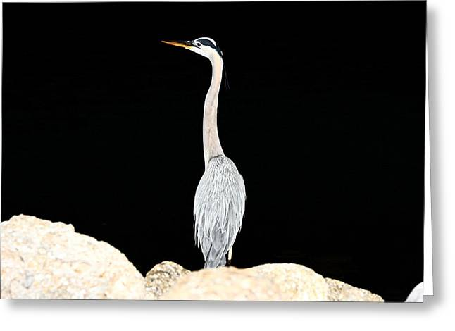 Night Of The Blue Heron  Greeting Card