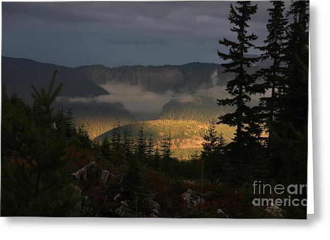 Night On Cougar Mountain Series Vi Greeting Card