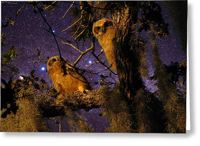 Night Owls Greeting Card by Phil Penne