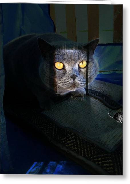 Night Prowler Greeting Card by Shirley Sirois