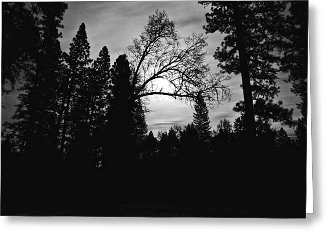 Greeting Card featuring the photograph Night Shadows by Lennie Green