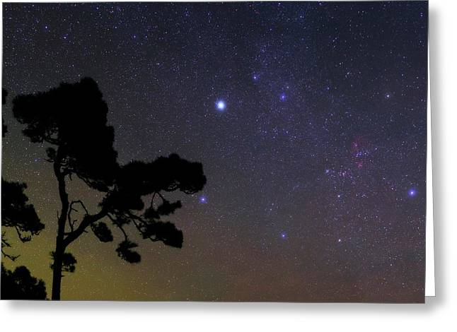 Night Sky Over Trees Greeting Card by Babak Tafreshi