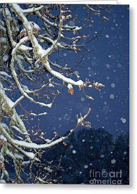 Night Snow Greeting Card by Gwyn Newcombe