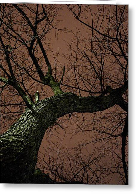 Night Tree Greeting Card by Michel Mata