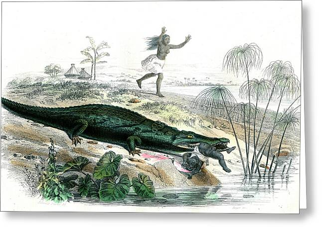 Nile Crocodile And Baby Greeting Card