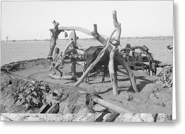 Nile Irrigation Pump, Sudan, 1936 Greeting Card by Science Photo Library