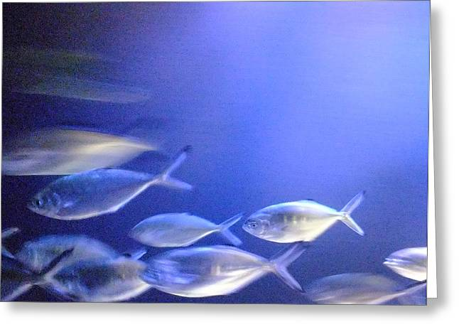 Nine Fishes Swimming Greeting Card