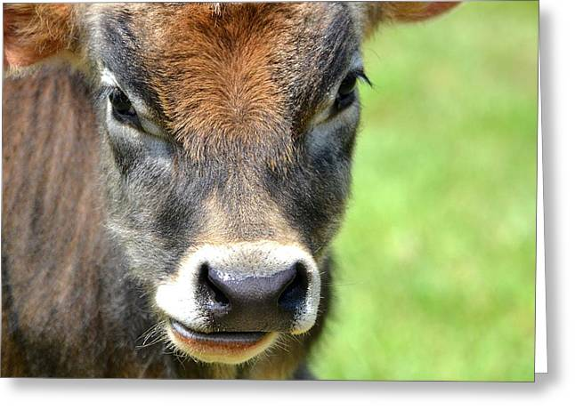 No Bull Greeting Card by Deena Stoddard