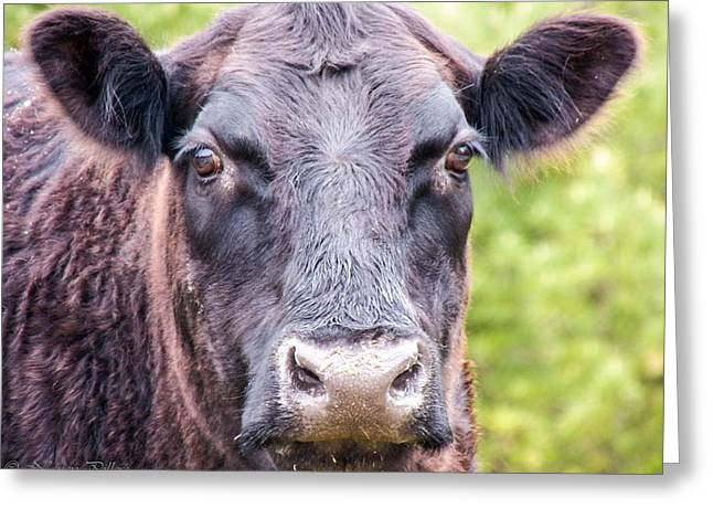 No Bull Greeting Card by Nancy  Pillers