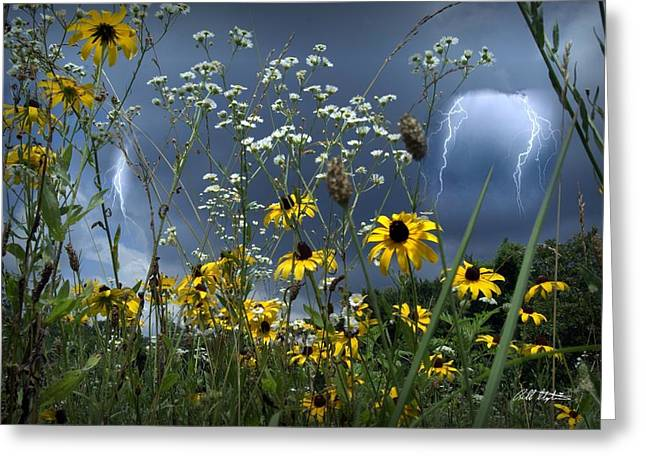 No Vase Needed Greeting Card by Bill Stephens