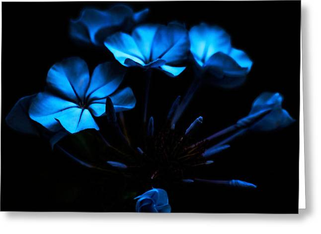 Nocturnal Blue Greeting Card