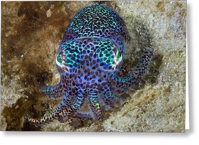 Nocturnal Bobtail Squid (sepiolida Greeting Card