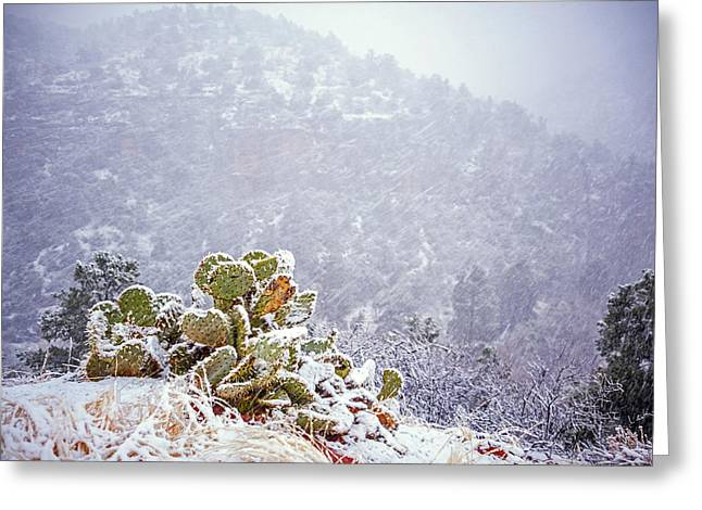 Nopal In Snow Greeting Card by Anthony Citro