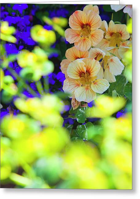 North America, Canada, Victoria, Flower Greeting Card by Terry Eggers