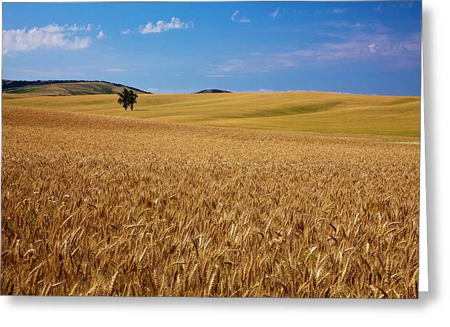 North America Usa Washington Palouse Greeting Card by Terry Eggers