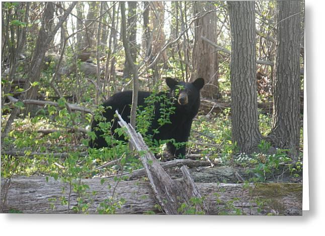 North American Black Bear Greeting Card
