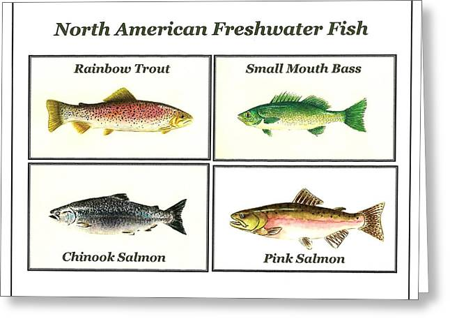 North American Freshwater Fish Greeting Card by Michael Vigliotti