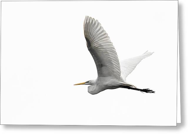 North American Great Egret Greeting Card