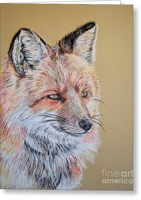 North American Red Fox Greeting Card by Ann Marie Chaffin