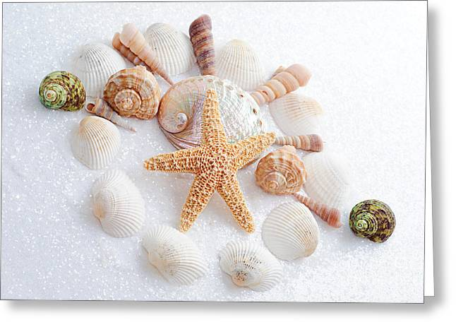 North Carolina Sea Shells Greeting Card
