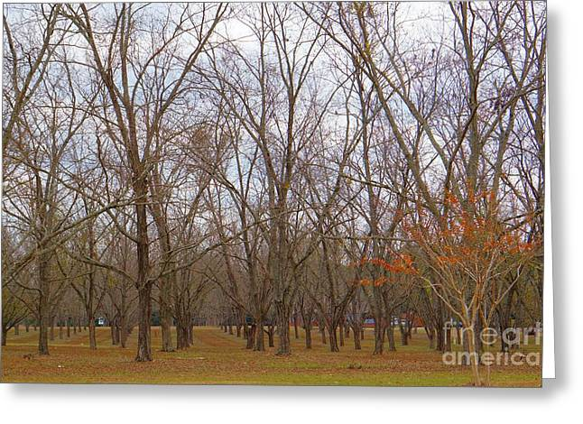 North Florida Orchard In Fall Greeting Card